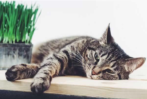 хроническая почечная недостаточность кошек