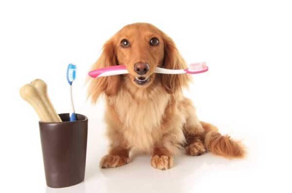 почистить зубы собаке в клинике