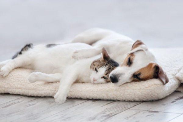 кастрация кошек и собак