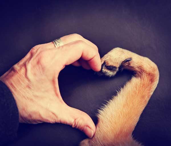 эндокардиоз митрального клапана у собак