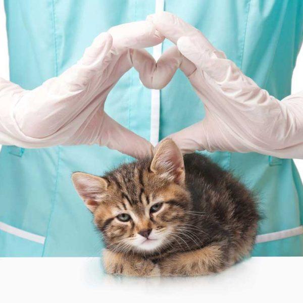 ветеринар кардиолог
