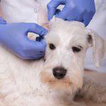ветеринарный врач дерматолог