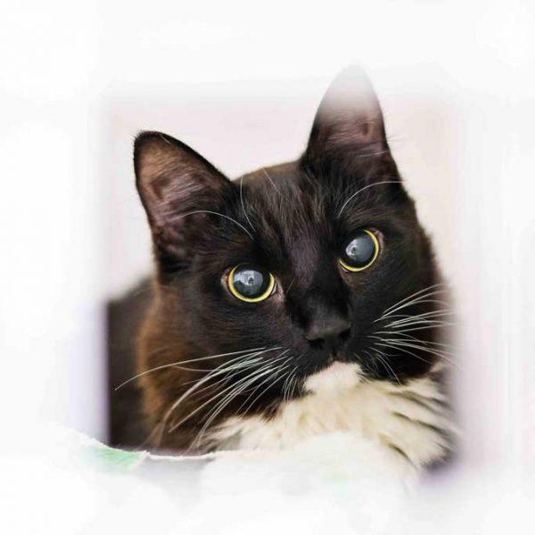 стационар для кошек и собак